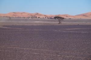 SUMMER: Deserito Sahara