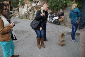 Let the monkey business begin!  I was a little afraid of these buggers.