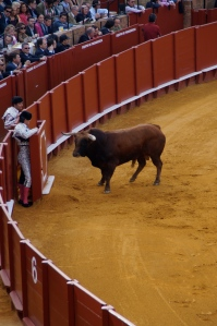 This is why these are novice bullfighters:  They run and hide behind this wall once the bull runs towards them.