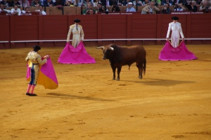 Here the novice bullfighters are testing out the bull to figure out its moves.