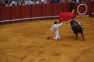 """Olé!  This guy actually got """"gored"""" (AKA hit by the bull) twice.  His shoes flew off.  It was great."""