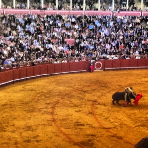 The bullfighter is considered braver when they make the bull run close to them.