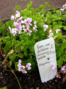 Flowers labeled in the scientific names that Linneaus' created!