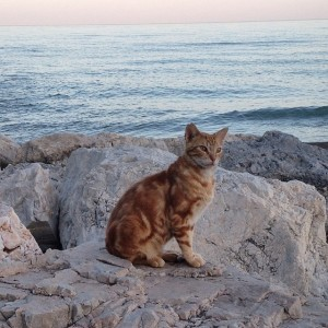 One of my many friends who also came to ponder life by the sea.